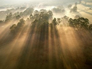 transcendentalism-photo